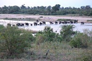 Elefantenherde durchquert den Crocodile River